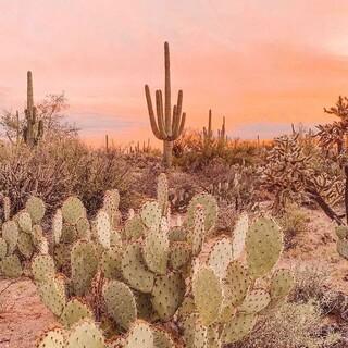 Jaka jest Wasza ulubiona pora roku? Napiszcie w komentarzu ✍🏻  Dla nas zdecydowanie lato ☀️🥂  #gabbiano #gabbianopl   #repost #pinterest #cactus #plants #pinkvibes